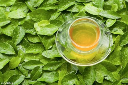 A compound found in green tea has been found to kill off oral cancer cells, while leaving healthy cells undamaged. Scientists at Penn State have now identified how the process targets the disease